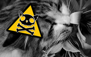 Особенности лечения кошек после отравления лилиями