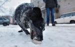Чем травят собак догхантеры — что нужно знать хозяину питомца