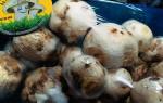 Если шампиньоны черные под шляпкой: безопасно ли есть такие грибы?