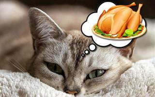 Реабилитация кошек после отравления: правила диеты