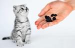 Можно ли давать коту активированный уголь при отравлении?
