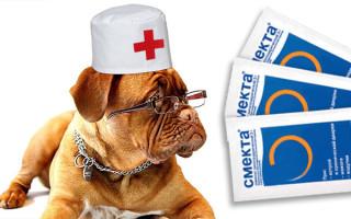 Как давать Смекту собаке при поносе и рвоте?