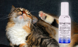 Отравление перметрином у кошки: симптомы и первая помощь