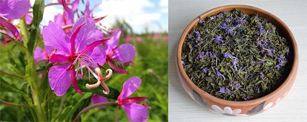 Цветы кипрея и иван-чай