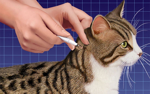 Обработка кота от блох
