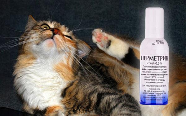 Перметрин от блох у кошек