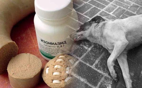 Собаку отравили изониазидом