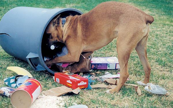 Собака роется в мусорном баке