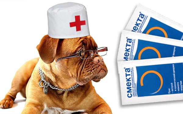 Доктор пес и смекта