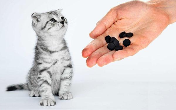 Котенок и активированный уголь