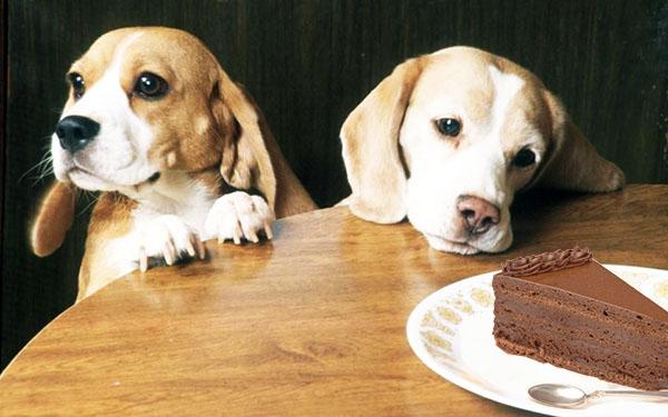 Бигли и шоколадный торт