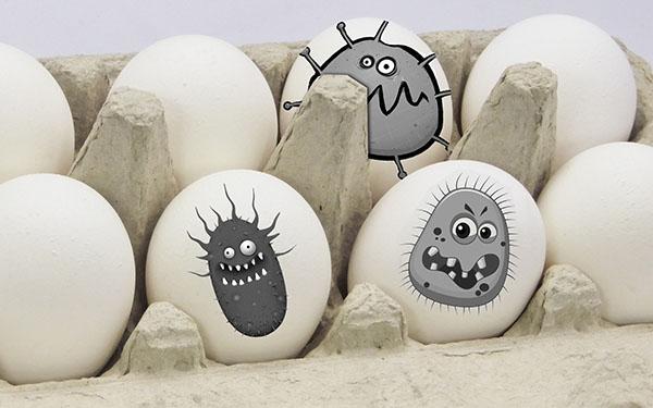 Сальмонеллы на яйцах